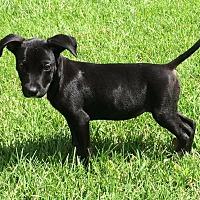 Adopt A Pet :: Sue Ellen - Covington, TN