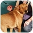 Photo 3 - Golden Retriever/Retriever (Unknown Type) Mix Dog for adoption in Berkeley, California - Sabrina