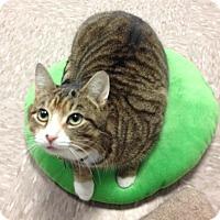 Adopt A Pet :: Capri - Byron Center, MI