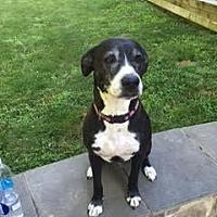 Adopt A Pet :: Dakota (Courtesy Listing) - Spotsylvania, VA