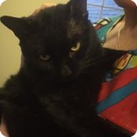 Adopt A Pet :: Penn - Baltimore, MD