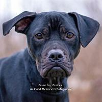 Adopt A Pet :: Darth Vader (Foster or Adopt) - Columbus, OH