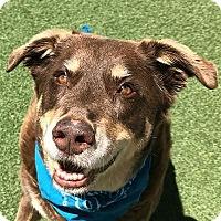 Adopt A Pet :: Wylie - Denver, CO