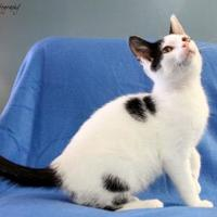 Adopt A Pet :: LARRY - Bucyrus, OH