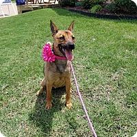 Adopt A Pet :: Clair Bear - Austin, TX