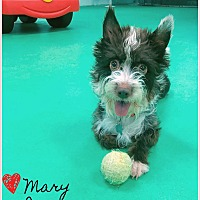Adopt A Pet :: Mary Jane - PHOENIX, AZ