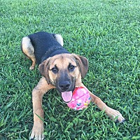 Adopt A Pet :: Cabela - Greeneville, TN