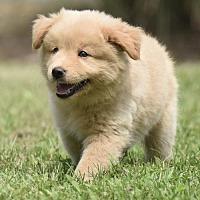 Adopt A Pet :: Brenna - Mechanicsburg, PA