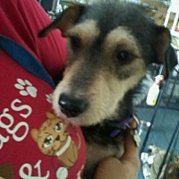 Adopt A Pet :: Willow - Willows, CA