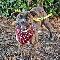 Adopt A Pet :: Max - Yuba City, CA
