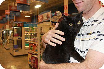 Domestic Shorthair Cat for adoption in Smyrna, Georgia - Winston