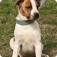 Adopt A Pet :: Sadie  $300 adoption fee - Ocala, FL