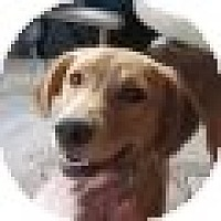 Adopt A Pet :: Ruby/Bailey - Denver, CO