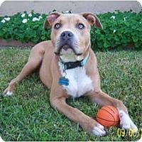 Adopt A Pet :: MAVERICK - Malibu, CA