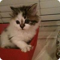 Adopt A Pet :: Lizzy - Justin, TX