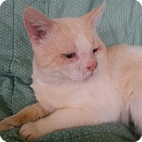 Adopt A Pet :: Ebenezer AKA