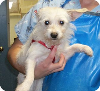 Terrier (Unknown Type, Medium) Mix Dog for adoption in Winder, Georgia - Sonic