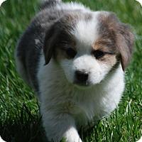 Adopt A Pet :: Elsa - Providence, RI