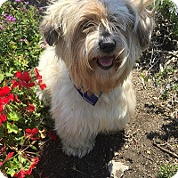 Adopt A Pet :: WILLY - Rancho Palos Verdes, CA