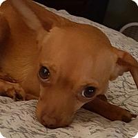 Adopt A Pet :: Winnie - Gilbert, AZ