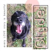 Adopt A Pet :: Clyde - Chattanooga, TN