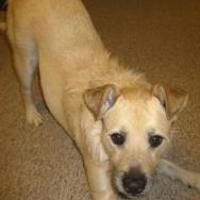 Adopt A Pet :: Diamond - Rochester Hills, MI