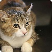 Adopt A Pet :: Gidget - Boise, ID