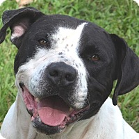 Adopt A Pet :: Puck- adoption just $50 - Friendswood, TX