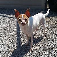 Adopt A Pet :: Ethel - Port Clinton, OH