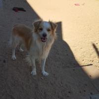Adopt A Pet :: Smokey - Tucson, AZ
