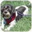 Photo 2 - Shih Tzu Mix Dog for adoption in Los Angeles, California - Domino