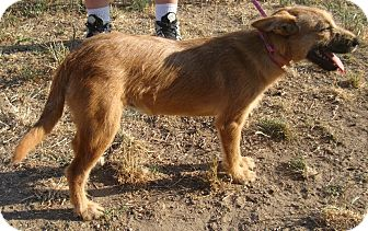 Terrier (Unknown Type, Small) Mix Dog for adoption in Eustace, Texas - Shirley