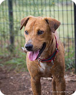 Shepherd (Unknown Type) Mix Dog for adoption in Bulverde, Texas - Trina
