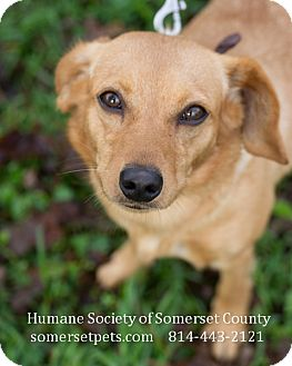 Terrier (Unknown Type, Small) Mix Dog for adoption in Somerset, Pennsylvania - Jackie