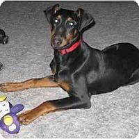 Adopt A Pet :: Sadey - Chandler, IN