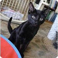 Adopt A Pet :: Sully - Davis, CA