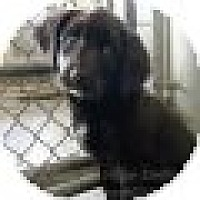 Adopt A Pet :: Tuesday - Denver, CO