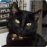 Adopt A Pet :: Miss Kitty - Pasadena, CA