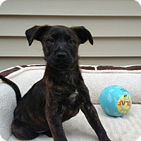 Adopt A Pet :: Tessa - Randolph, NJ