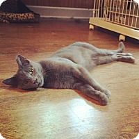 Adopt A Pet :: Sophie - Raleigh, NC