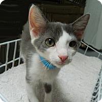 Adopt A Pet :: Corrigan - The Colony, TX