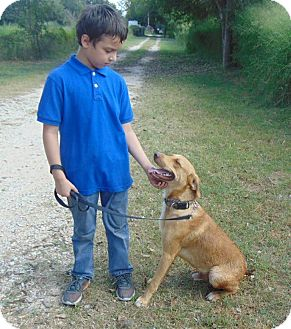Labrador Retriever/Weimaraner Mix Dog for adoption in Olympia, Washington - Pal