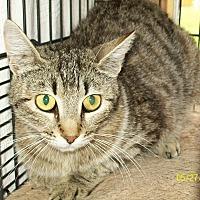 Adopt A Pet :: Ava - Mexia, TX