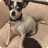 Adopt A Pet :: Roxie - Orlando, FL