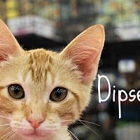Adopt A Pet :: Dipsey - Wichita Falls, TX