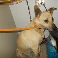 Adopt A Pet :: SKIP - Circleville, OH