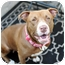 Photo 3 - American Pit Bull Terrier Mix Dog for adoption in Reisterstown, Maryland - Addison