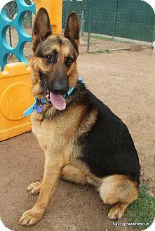 German Shepherd Dog Dog for adoption in Phoenix, Arizona - Romeo