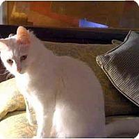 Adopt A Pet :: Flash - Alexandria, VA