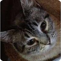 Adopt A Pet :: Beverly - Wenatchee, WA